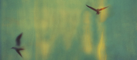 Seagulls-@-Fernanda-Montoro1